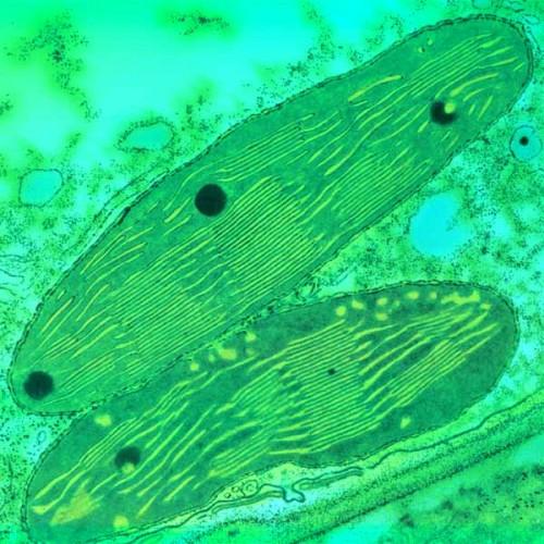 4. 3. 2. 1. Варианты ответа. пищеварение. фотосинтез. выделение продуктов распада. образование клеточных ферментов.
